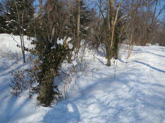 tree twig flowerbox projects