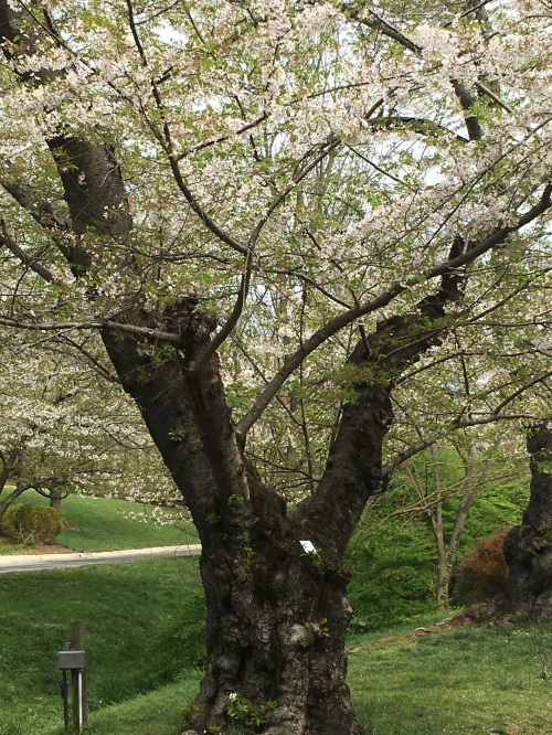 poem is in nook of tree in Kenwood, Maryland